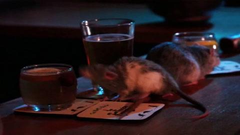 Un bar de Estados Unidos ofrece a sus clientes tocar y acariciar ratas