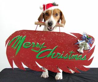 Christmas Pets Social