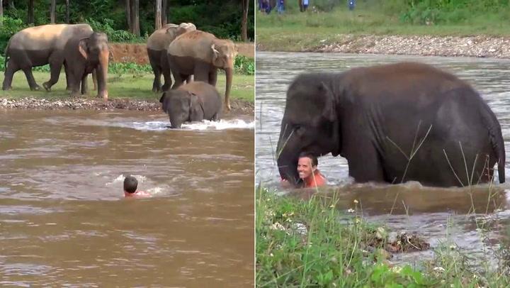 Elefanten fantastiske inngripen rører verden
