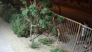 North Las Vegas police looking for homicide suspect – Video