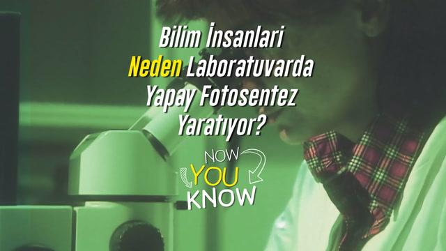 Now You Know? - Bilim insanları neden laboratuvarda yapay fotosentez yaratıyor?