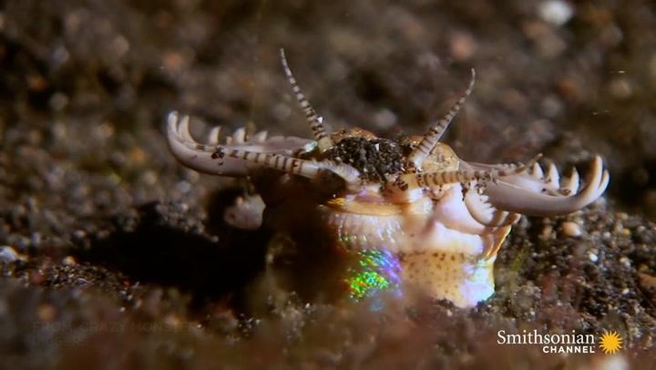 Undersjøisk skrekkorm vil gi deg mareritt