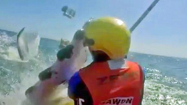 Hvalen klasket til redningsmann i hodet