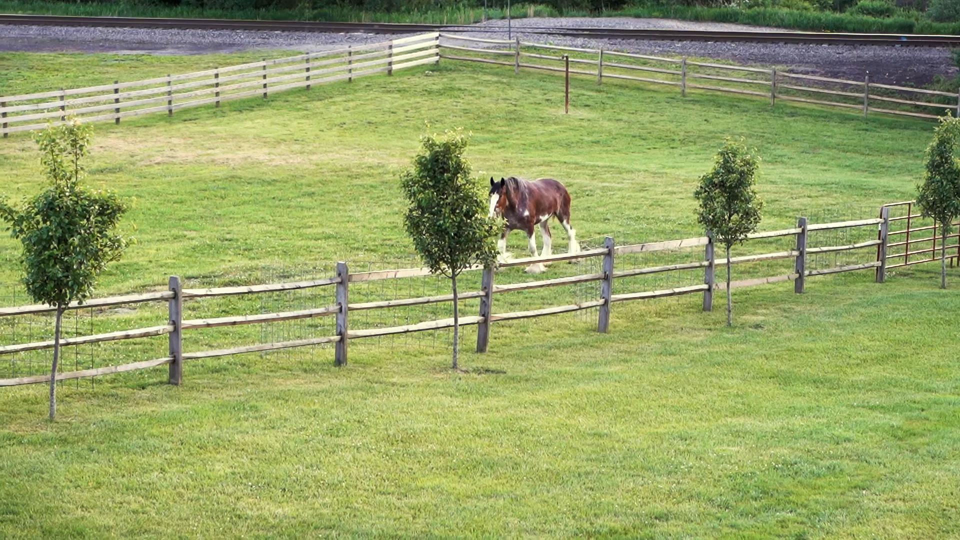 Colin + Kassi | Shelocta, Pennsylvania | Fairman Family Farms