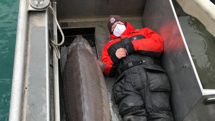 Encuentran un pez gigante de más de 100 años