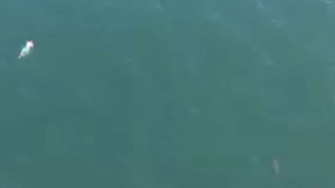 Intentó escapar de la policía nadando y casi se lo come un tiburón