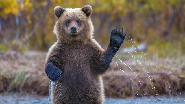 Bitcoin Bulls, Bears, and More Bulls Square Off Niujorke