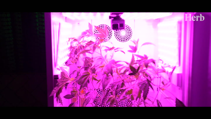 We Showed Hollywood's Elite How To Grow Weed In Their Living Room Thumbnail