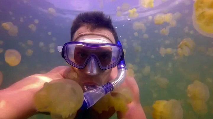 Svømmer i et hav av maneter