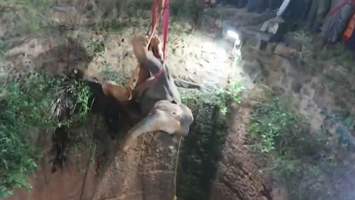Impresionante rescate de elefante que cayó a pozo de 20 metros