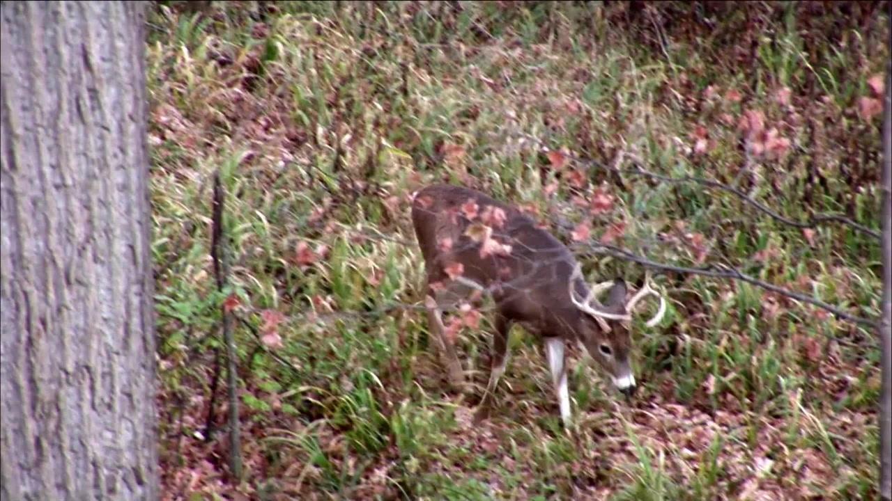 Whitetail Buck Crossbow Hunts