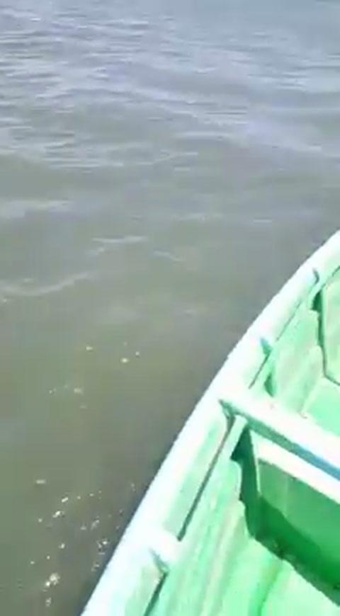 Pescador en Marcovia graba encuentro con un grupo de delfines