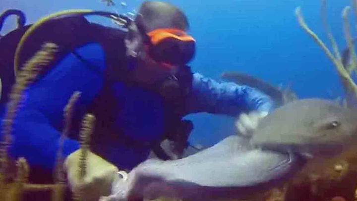 Sulten hai overrumpler dykker