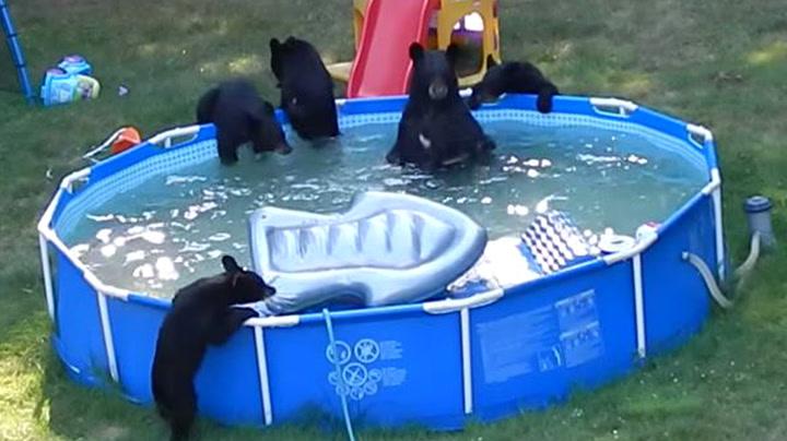 – Mamma, bjørnene spiser opp lekene mine!