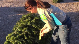 Christmas Tree Inspection
