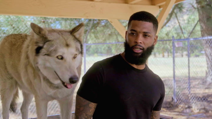King Keraun Becomes A Wolf Rescuer