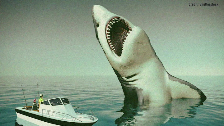 Megalodon: Facts about the long-gone, giant shark | Live Science