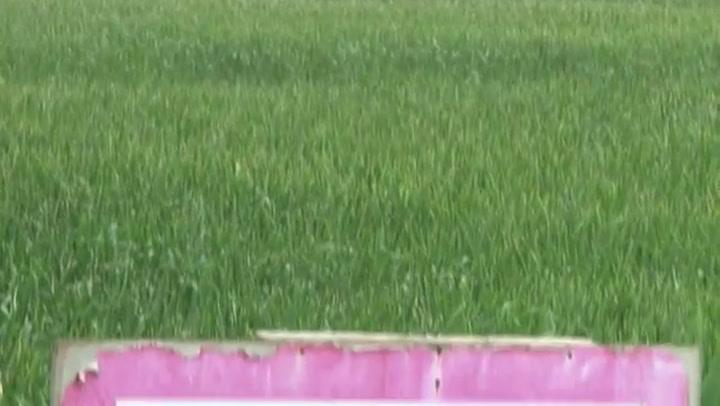 Video: Hedwigepolder mag onder water