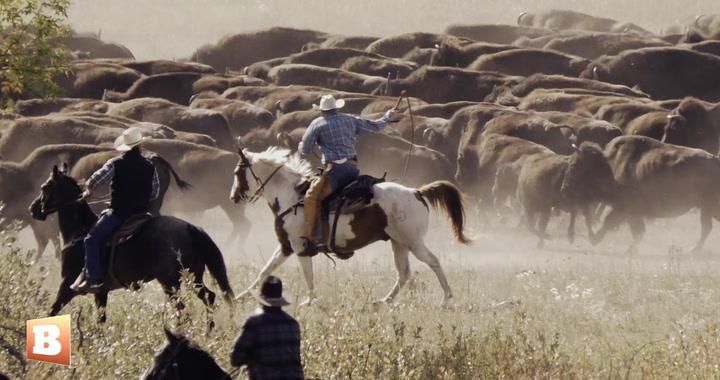 A Taste of America: The South Dakota Annual Governor's Buffalo Roundup