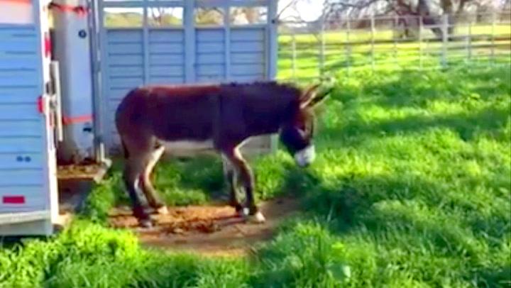 Eselet ser grønt gress for første gang