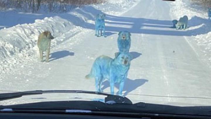 Aparecen perros callejeros de color azul y verde cerca de una fábrica abandonada
