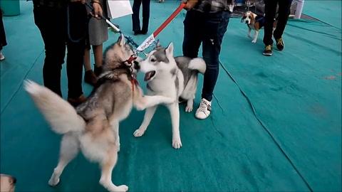 Un festival donde los perros son las estrellas