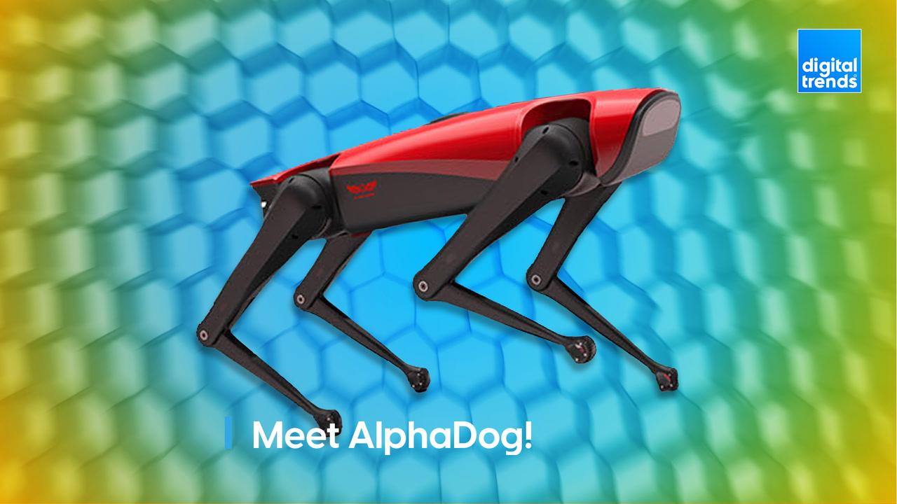 Meet AlphaDog!