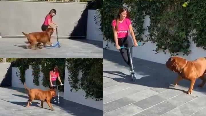 Messi comparte un divertido vídeo de Antonela jugando con su perro Hulk