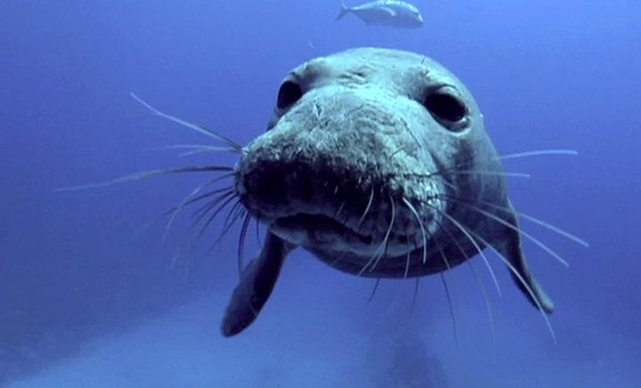 Saving the Endangered Monk Seal