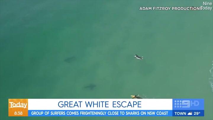 Dos tiburones acechan a los surfistas en Tuncurry Beach