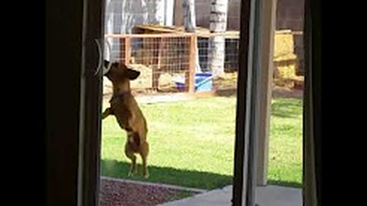 Frustrated Dog Doesnt Understand Why Her Ball Is Stuck In The Sky
