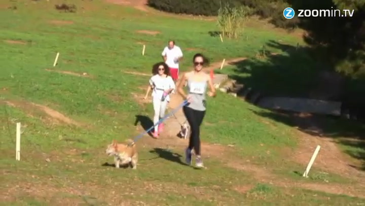 Video: Straathonden rennen voor zwervende soortgenoot