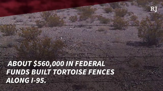 Transportation Department spends $700,000 to rebuild tortoise fences