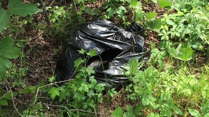 Hannah skvatt til da hun åpnet søppelsekken midt i skogen