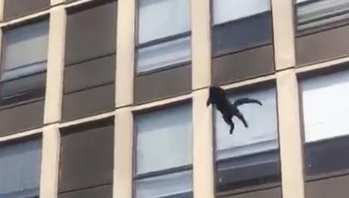 Un gato salta desde un quinto piso de un edificio en llamas... ¡y se marcha caminando!