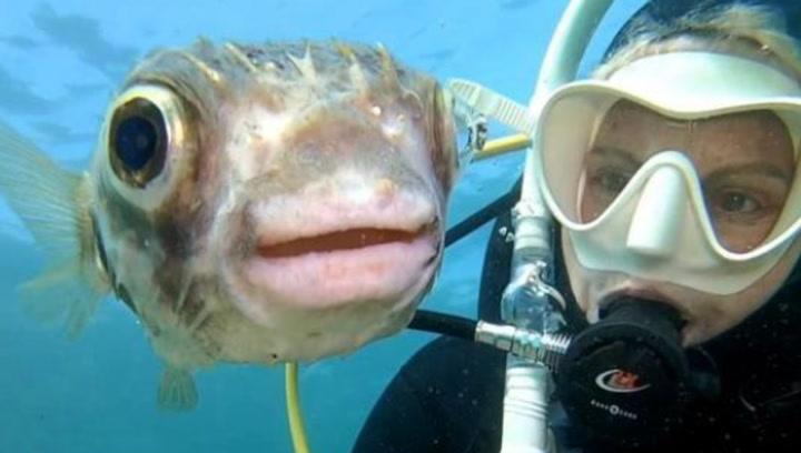 Un pez globo posa para un 'selfie' con una buceadora