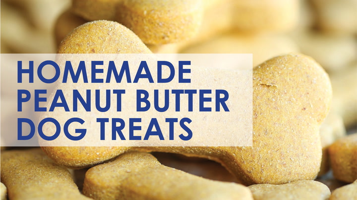 Homemade Peanut Butter Dog Treats Damn Delicious