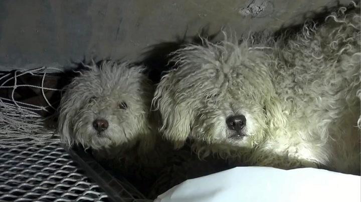 Livredde løshunder reddet fra kloakken