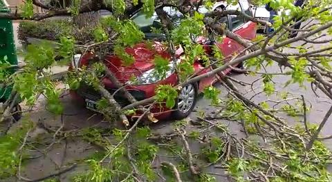 Un árbol cayó encima de un auto en la zona oeste y el conductor se salvó de milagro