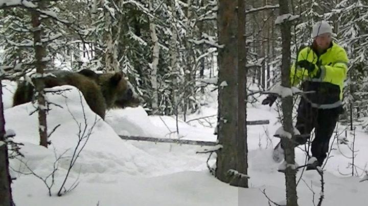 Lars (31) vekket bjørnen opp av hiet - da gikk den til angrep