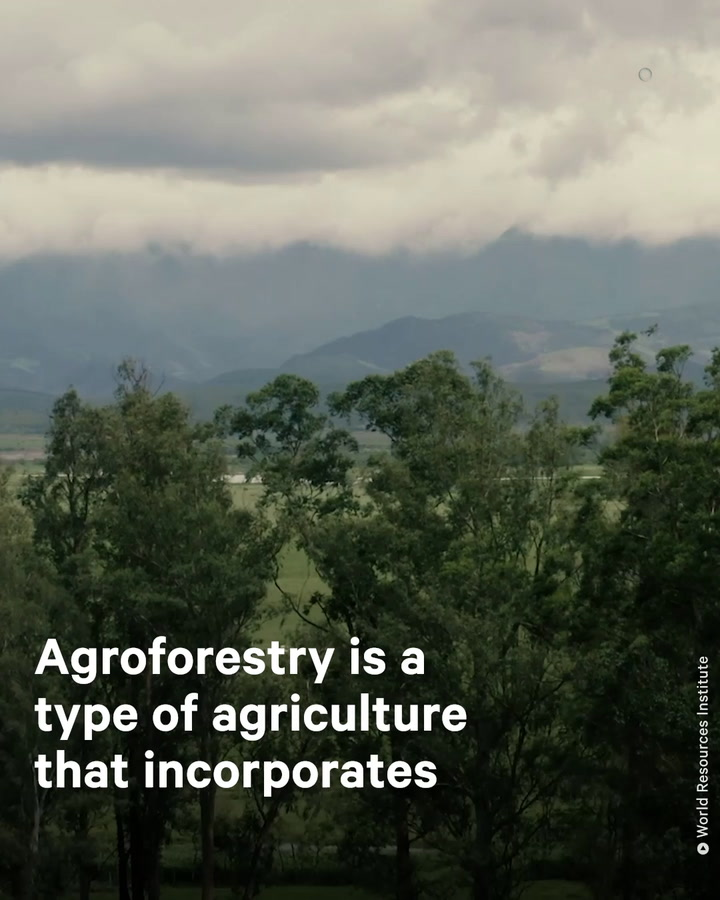 Agroforestry Used in Brazil to Replenish Degraded Land and Economy