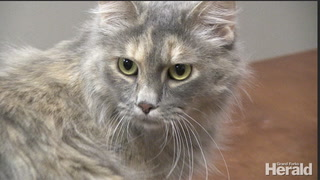 Adoptable Pet of the Week: Meet Celia