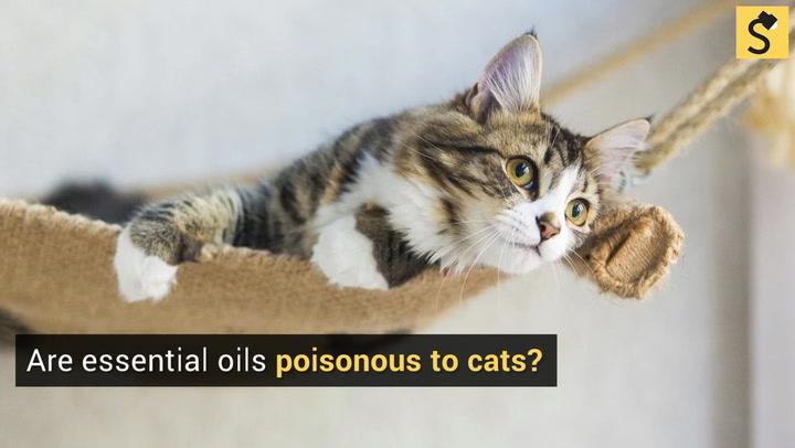 free kittens erie pa