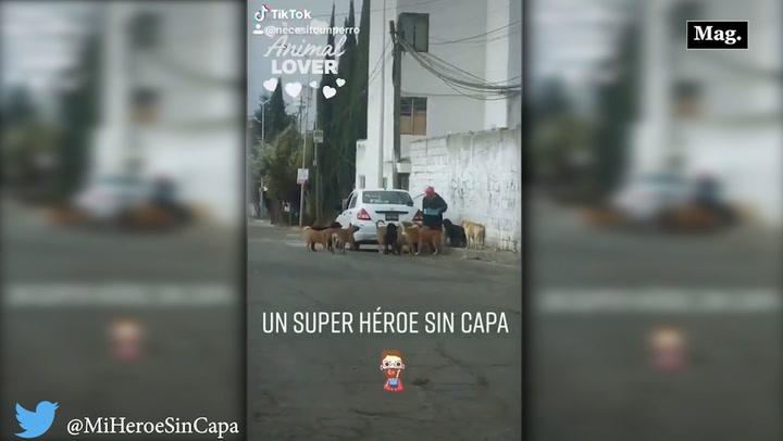 Viral: hombre alimenta perritos callejeros [VIDEO]