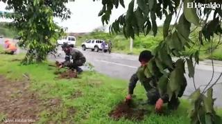 Policía Militar realiza jornada de reforestación en la capital