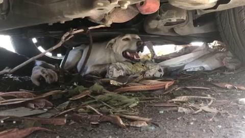 ONG reúne a personas con sus mascotas perdidas en explosión de Beirut