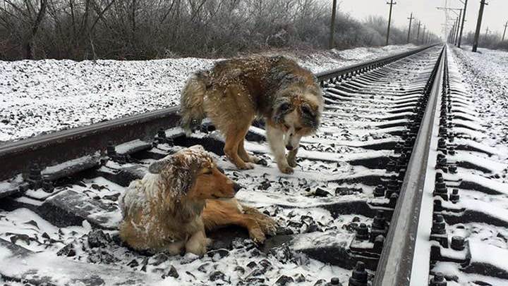 Hunden nektet å forlate skadet venn