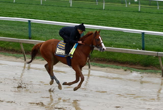 Sports Betting: Mud Covers Preakness Track