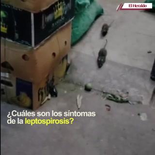 Aumentan casos de leptospirosis en zona norte tras inundaciones de Ea e Iota