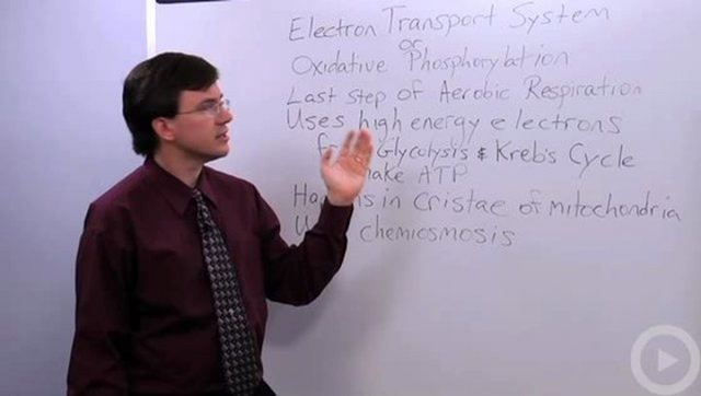Electron Transport System